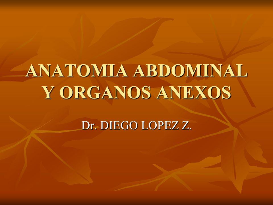 ANATOMIA ABDOMINAL Y ORGANOS ANEXOS Dr. DIEGO LOPEZ Z. - ppt descargar
