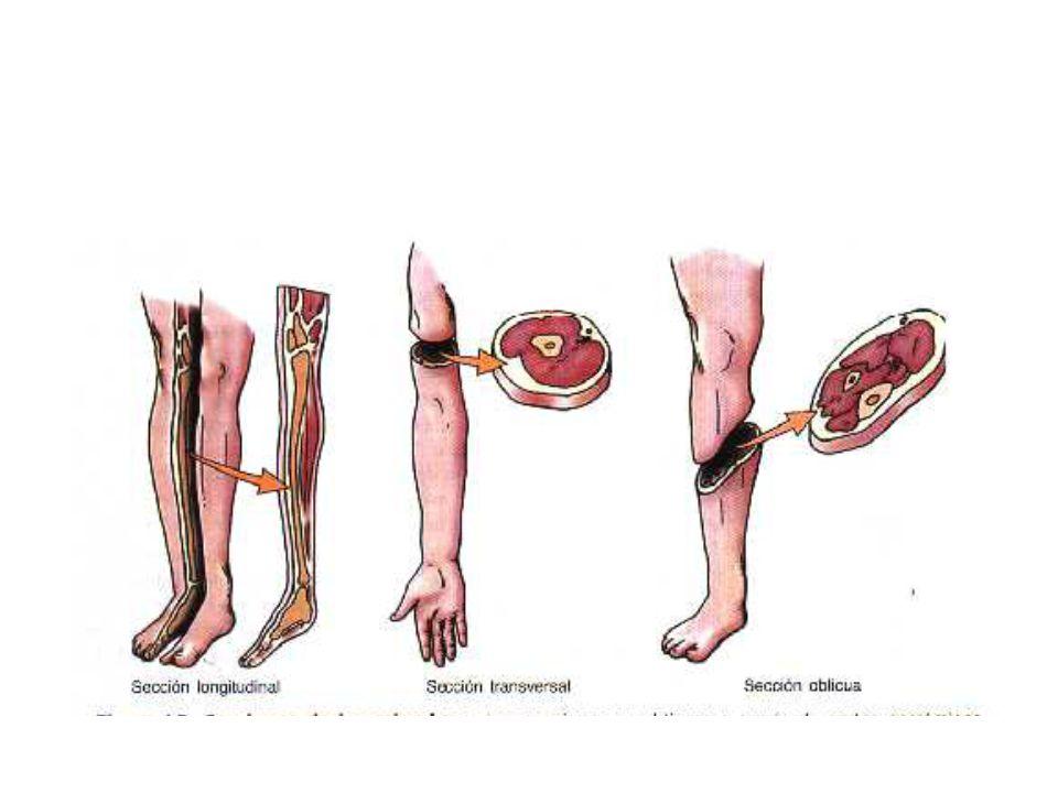 Nomenclatura anatómica - ppt video online descargar