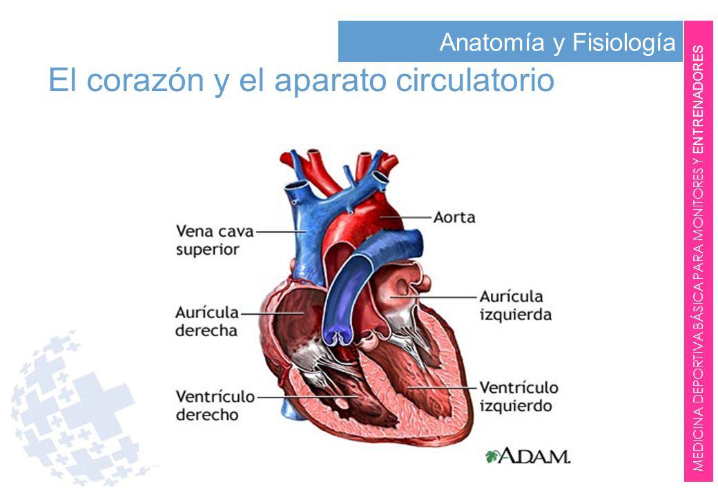 Asombroso Anatomía Y Fisiología Definiciones Quizlet Cresta ...
