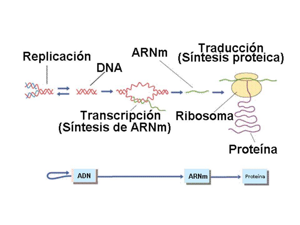 Modificaciones Del Dogma Central De La Biologia Molecular Temin