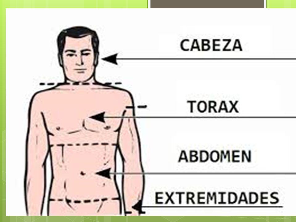 Que es el cuerpo humano ? El cuerpo humano es la estructura física y ...