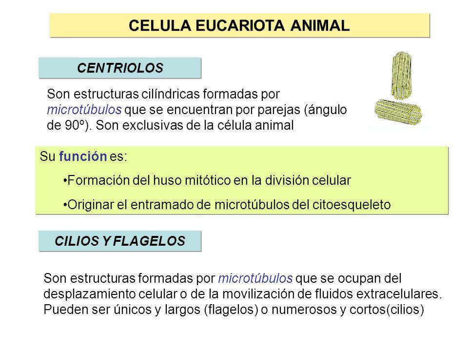Tipos De Celulas En La Naturaleza Pueden Encontrarse Dos