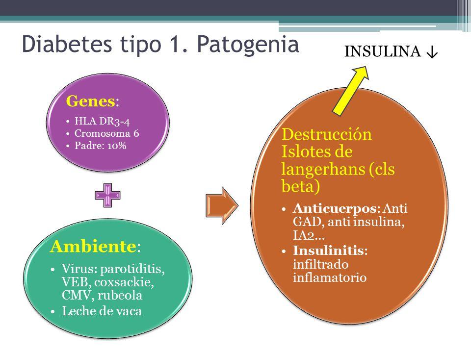anticuerpos de diabetes mellitus tipo 1