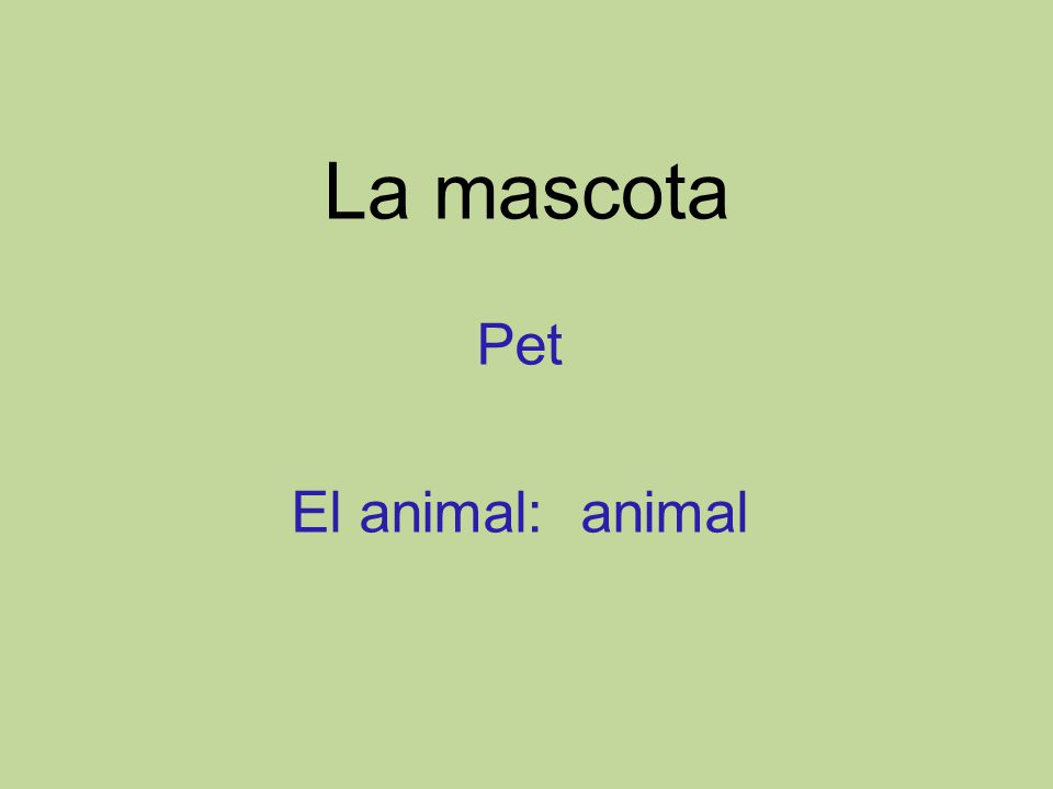 La mascota Pet El animal: animal
