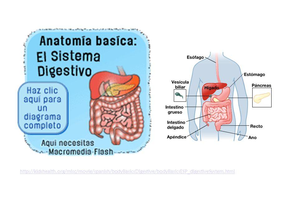 Partes del sistema digestivo - ppt video online descargar