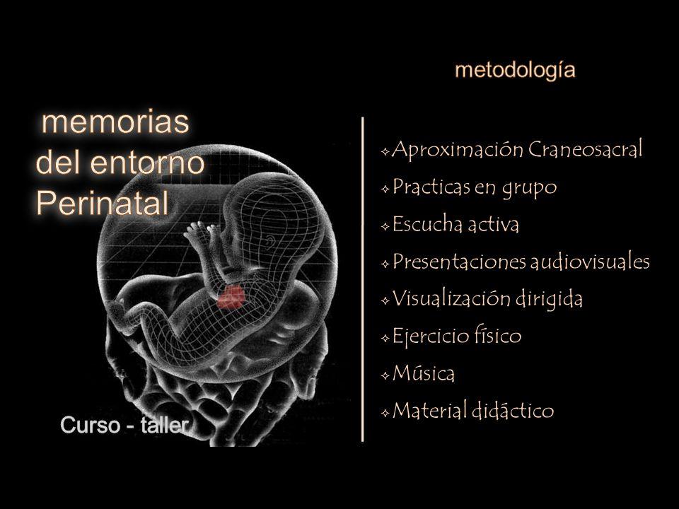 Desarrollo embrionario (repaso)  Vida fetal - organogenesis ...