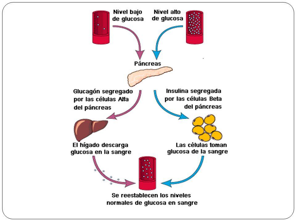 Función reguladora de las hormonas - ppt descargar