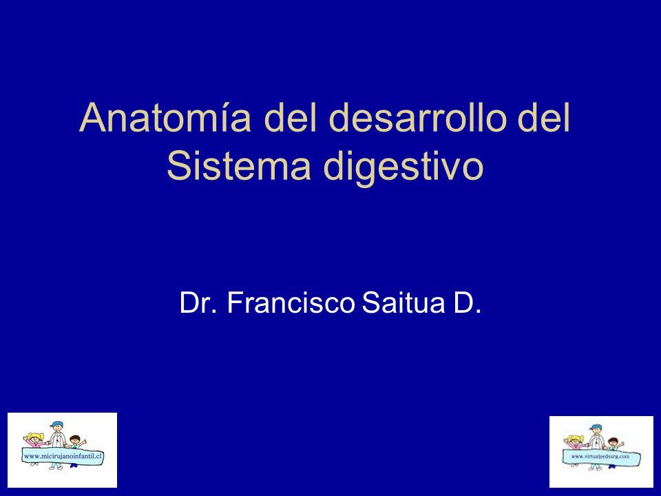 Anatomía del desarrollo del Sistema digestivo Dr. Francisco Saitua D ...