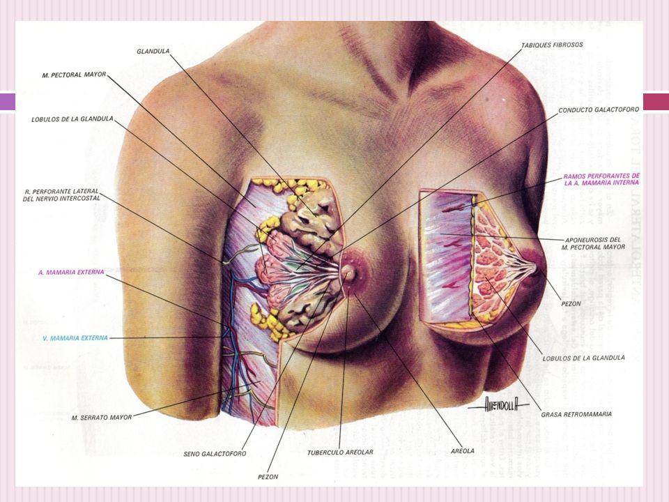 Técnica de exploración de mamas - ppt descargar