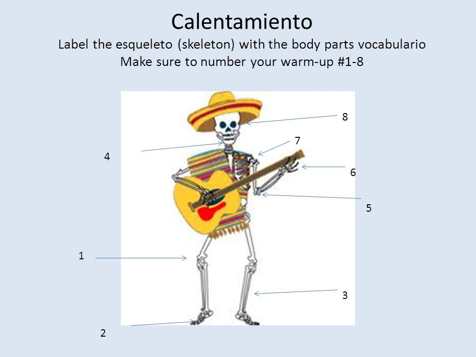 Calentamiento Label the esqueleto (skeleton) with the body parts vocabulario Make sure to number your warm-up #