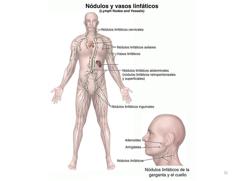 Sistema Linfático e inmunológico - ppt descargar