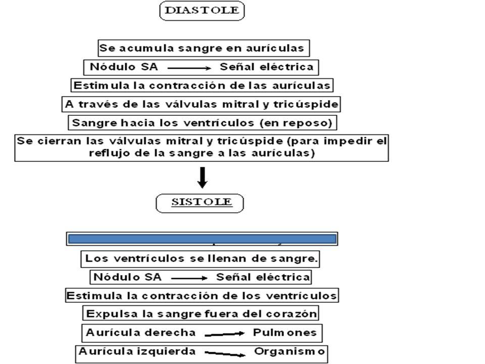 Phlebotomy 1 Cardiovascular Instructor: Dr. Georgina León - ppt ...