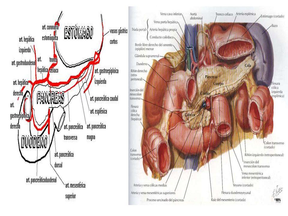 Anatomía del Aparato Digestivo - ppt video online descargar