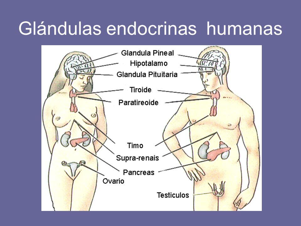 USO DE HORMONAS EN EL ÁREA DE LA SALUD Y LA PRODUCTIVIDAD. - ppt ...