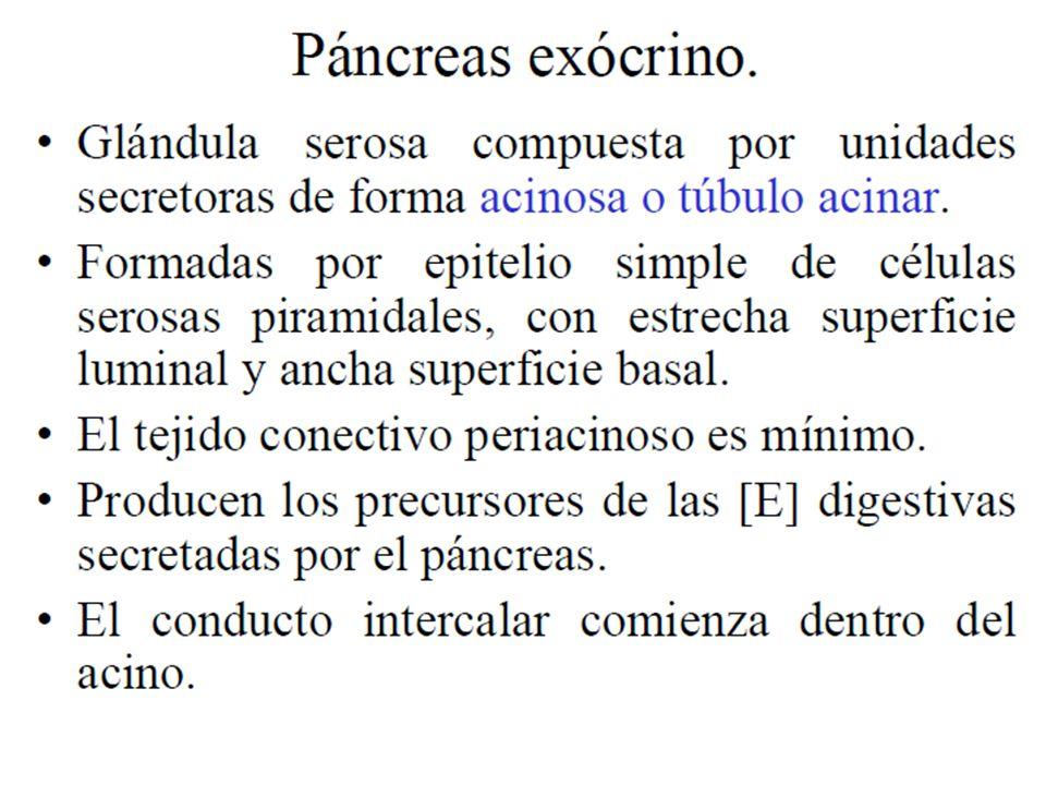 El Páncreas. - ppt video online descargar