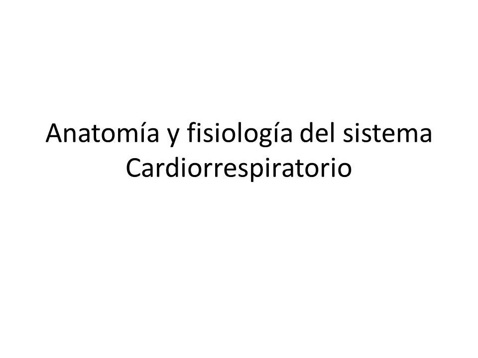 Anatomía y fisiología del sistema Cardiorrespiratorio. - ppt descargar