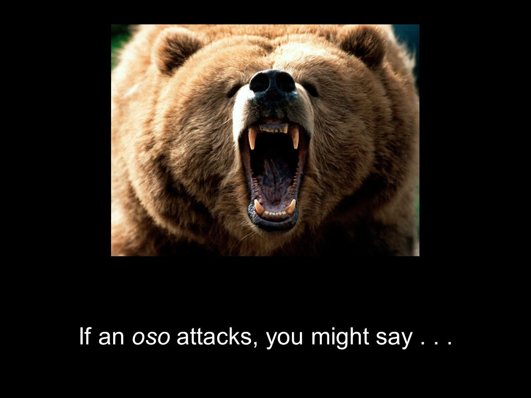 If an oso attacks, you might say...