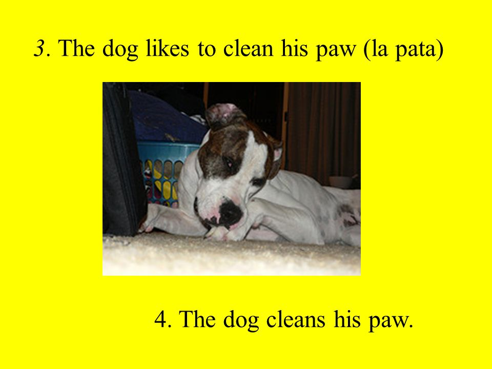 3. The dog likes to clean his paw (la pata) 4. The dog cleans his paw.