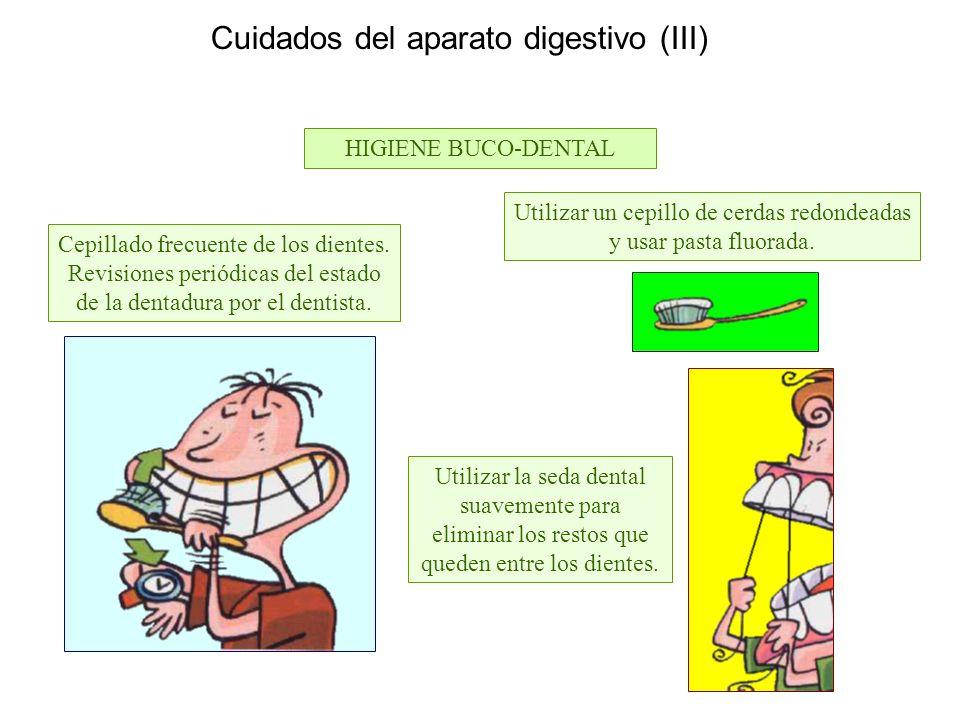 Anatomía del aparato digestivo Dientes Lengua Glándulas salivales ...
