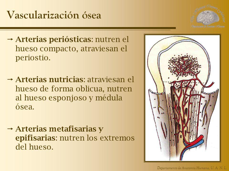 UNIDAD 1. Anatomía y Técnicas de Imagen. Departamento de Anatomía ...