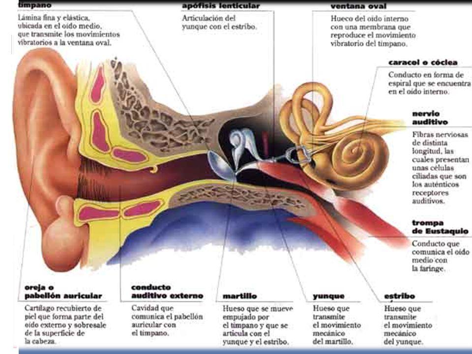 Jorge G. Mariel G. Anatomía ppt descargar