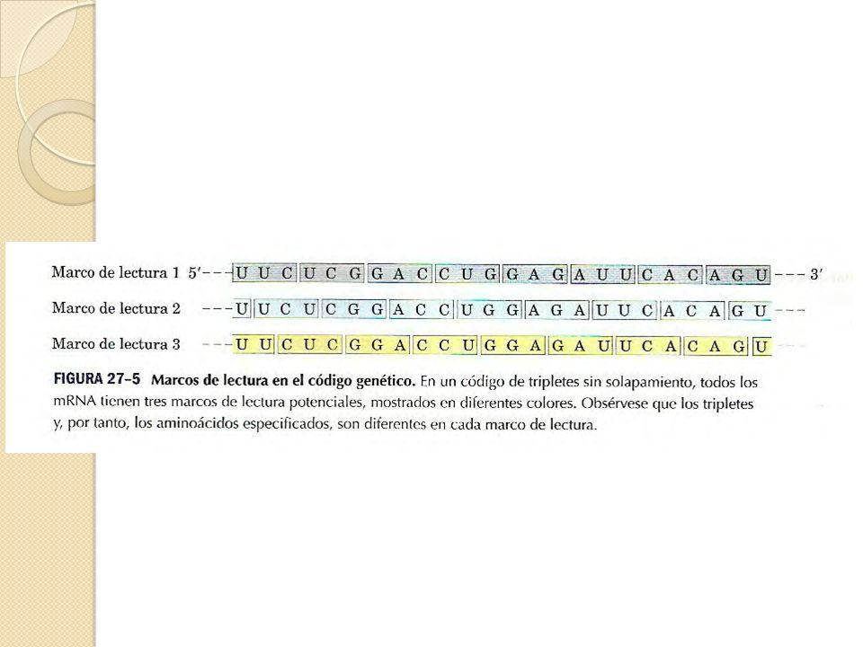 Química Biológica Lic en Nutrición ppt video online descargar