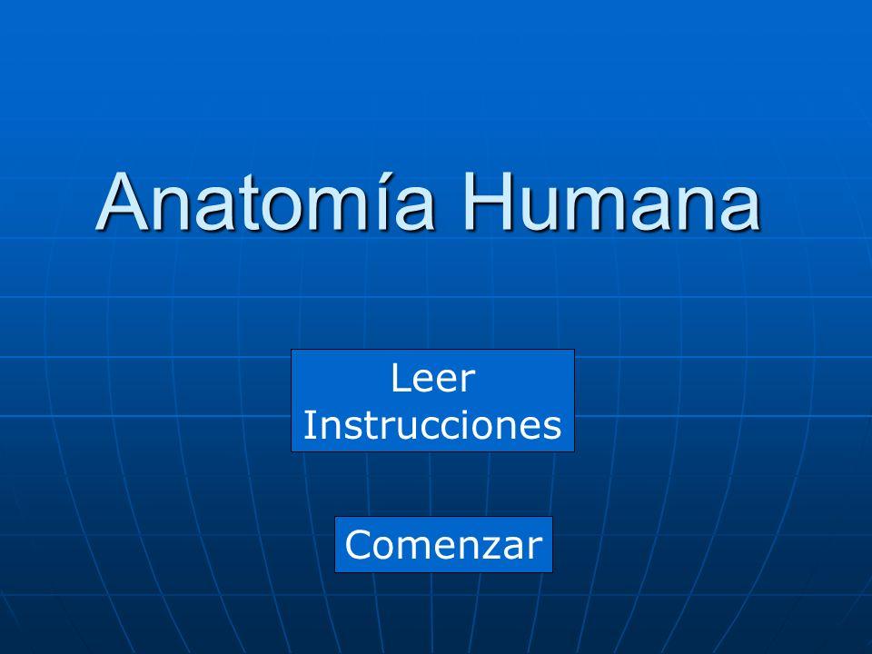 Anatomía Humana Leer Instrucciones Comenzar. Instrucciones Conteste ...
