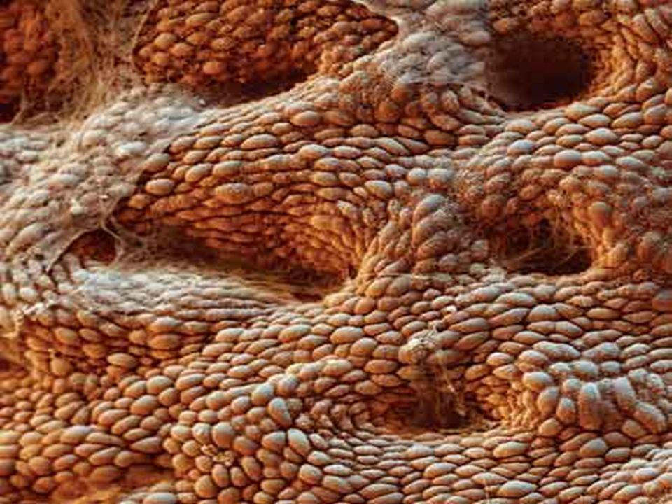 Imágenes asombrosas del interior del cuerpo humano. - ppt descargar