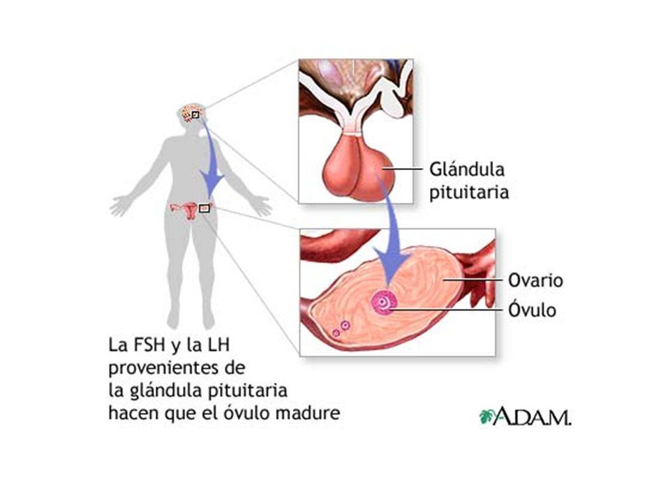 Dorable La Anatomía De La Sexualidad Motivo - Imágenes de Anatomía ...