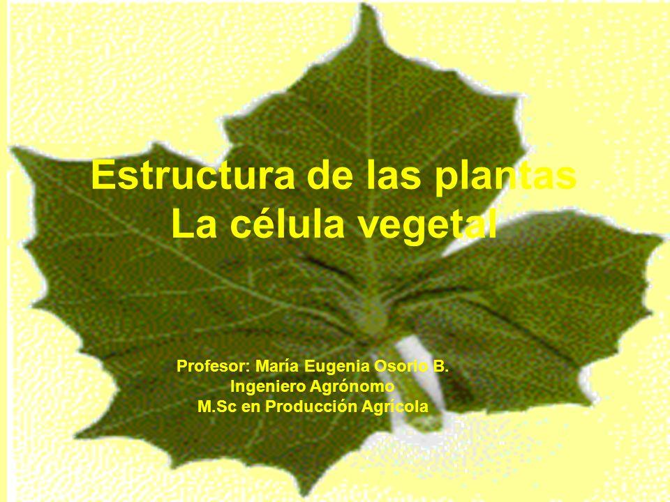 Estructura de las plantas La célula vegetal Profesor: María Eugenia ...