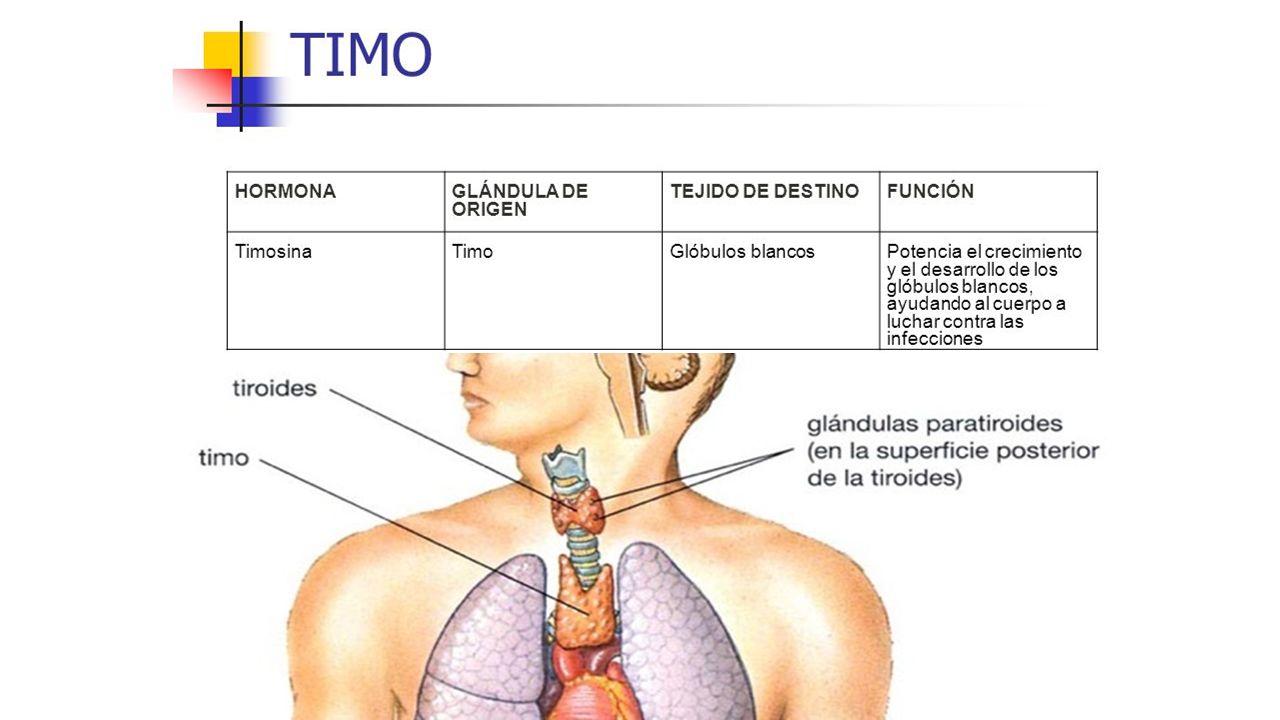 HORMONAS. HORMONAS Hormonas Son sustancias químicas secretadas por ...
