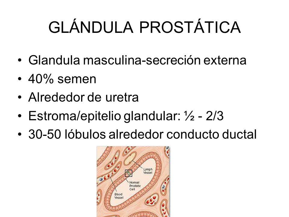 epitelio glandular de próstata