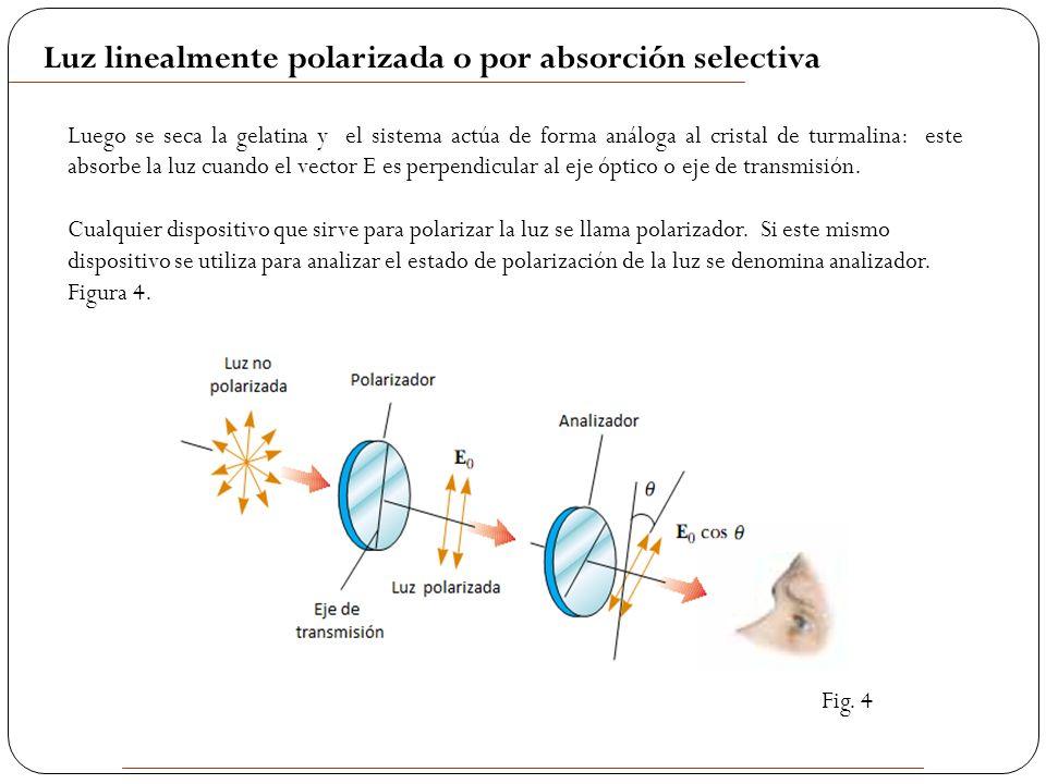 3e4e9c538c 6 Luego se seca la gelatina y el sistema actúa de forma análoga al cristal  de turmalina: este absorbe la luz cuando el vector E es perpendicular al  eje ...