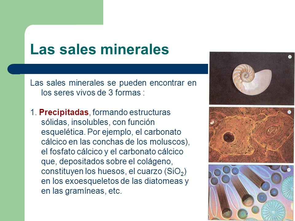 biomoleculas inorgánicas agua y sales minerales