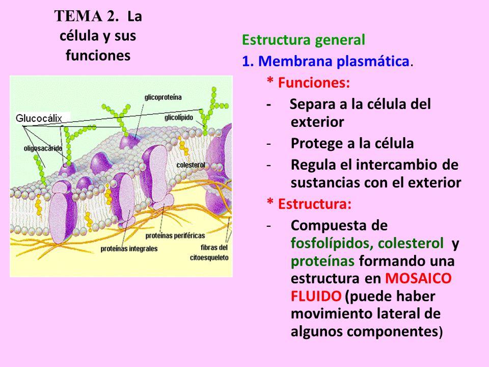 Tema 2 La Célula Y Sus Funciones 1 La Teoría Celular La