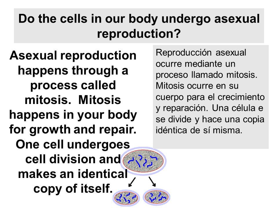 Reproduccion de celulas asexual spores