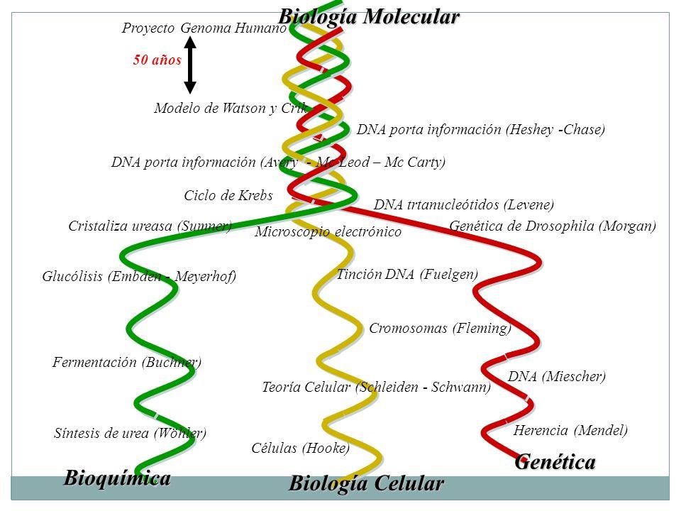 Introducción A La Estructura Del Dna Biología Molecular Y