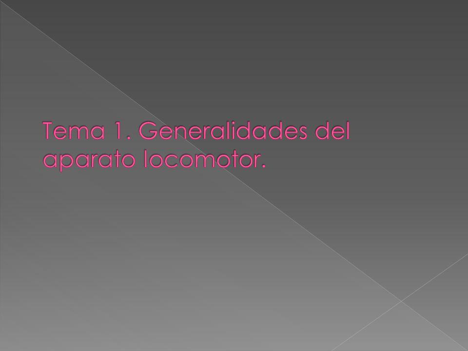 1. Definición de anatomía y generalidades del aparato locomotor ...