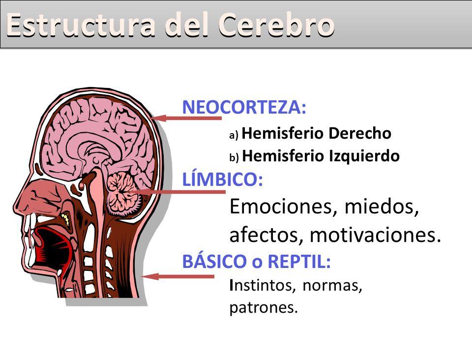 Aportes de la Neurociencia Aportes. NEOCORTEZA: a) Hemisferio ...