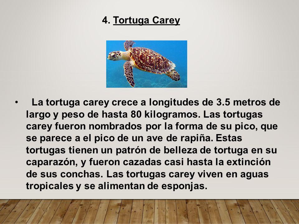 JULIO BARBER BRACERO ADMINISTRACIÓN DE EMPRESAS Tortugas marinas ...