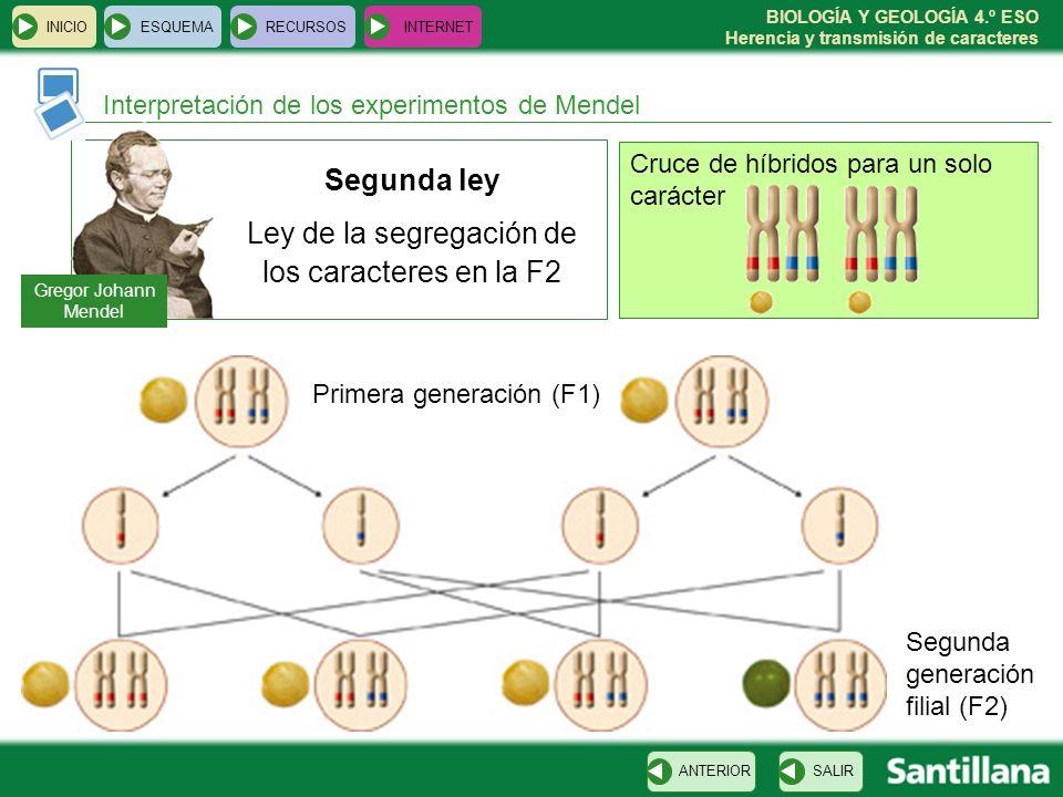 Genética Mendeliana 4º Eso Lessons Blendspace
