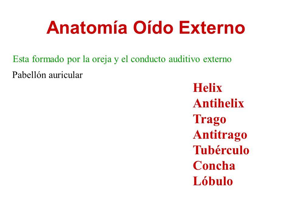 Anatomía Oído Externo Esta formado por la oreja y el conducto ...