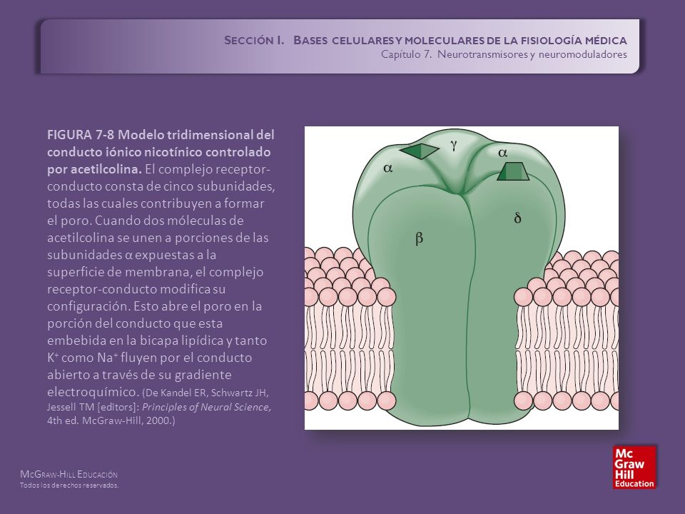 S ECCIÓN I. B ASES CELULARES Y MOLECULARES DE LA FISIOLOGÍA MÉDICA ...