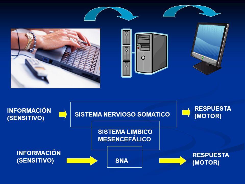 Sistema Nervioso Autónomo Cátedra de Anatomía y Fisiología Humana ...