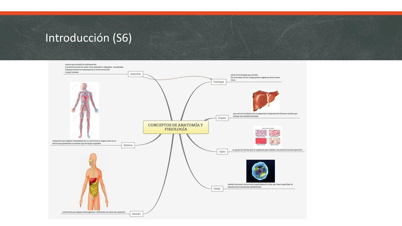 Anatomía y Fisiología Humana Aspectos generales (Sesiones 6, 7, 8, 9 ...