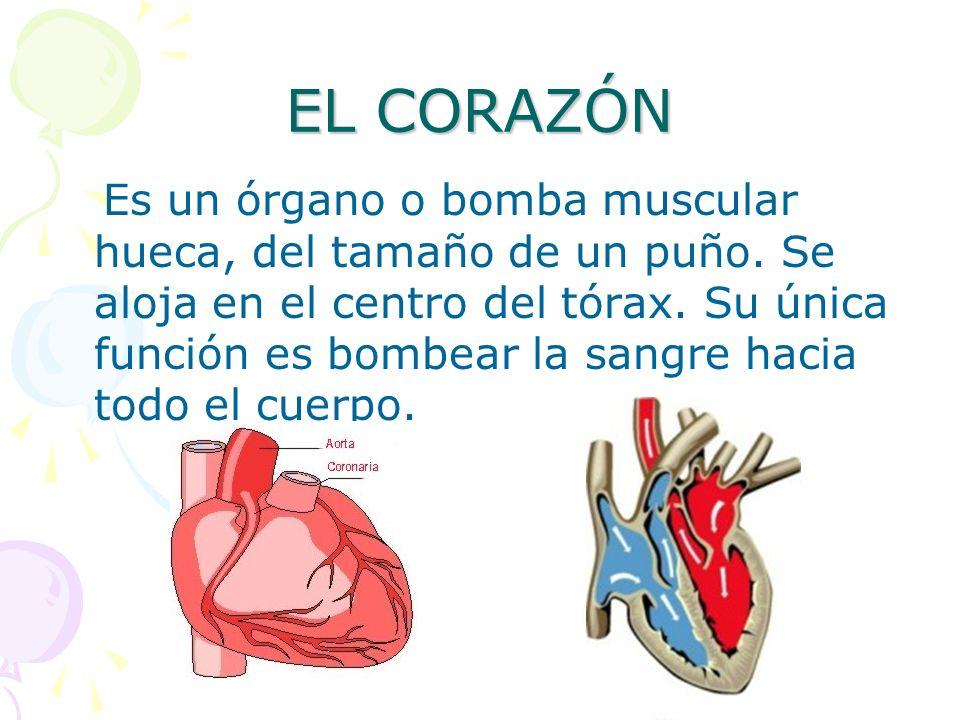 EL SISTEMA CIRCULATORIO. FUNCIÓN El sistema o aparato circulatorio ...