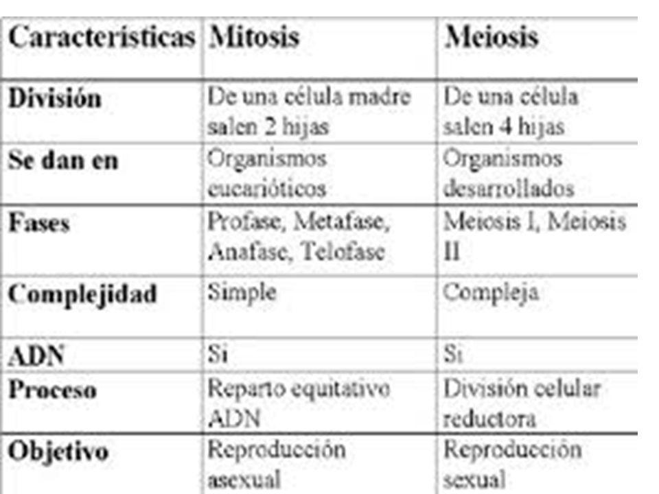 Cuadro Comparativo De Semejanzas Y Diferencias De Mitosis Y Meiosis