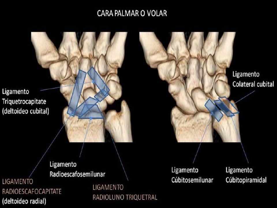 Anatomía Radiológica de Muñeca y mano - ppt descargar