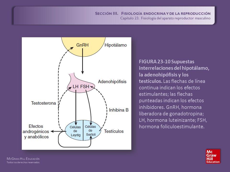 S ECCIÓN III. F ISIOLOGÍA ENDOCRINA Y DE LA REPRODUCCIÓN Capítulo 23 ...