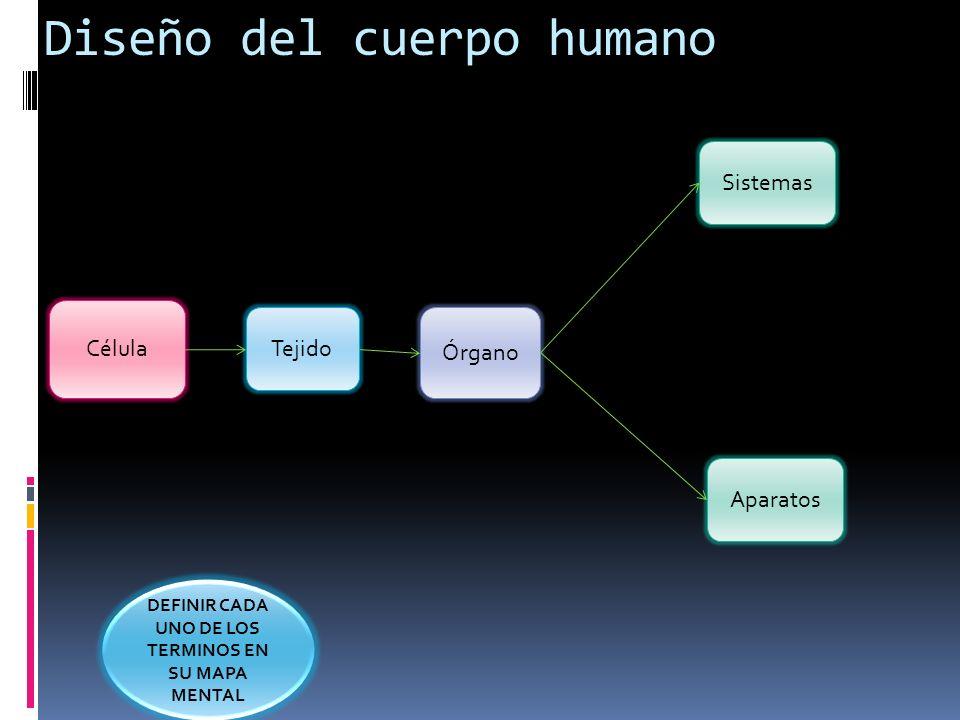 Célula Tejido Órgano Sistemas Aparatos Diseño del cuerpo humano ...